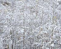 Vedauwoo, Aspens, Snow