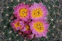 Vedauwoo, cactus