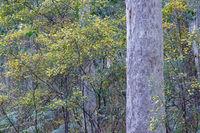 Murramarang National Forest, Forest, Flowers