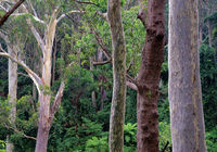 South Coast Rainforest