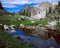 Snowy Range, wildflower, lake, reflection