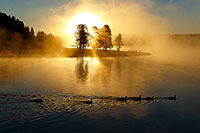 Yellowstone National Park, Sunrise, Geese