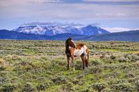 Platte Valley, Horse, Saratoga