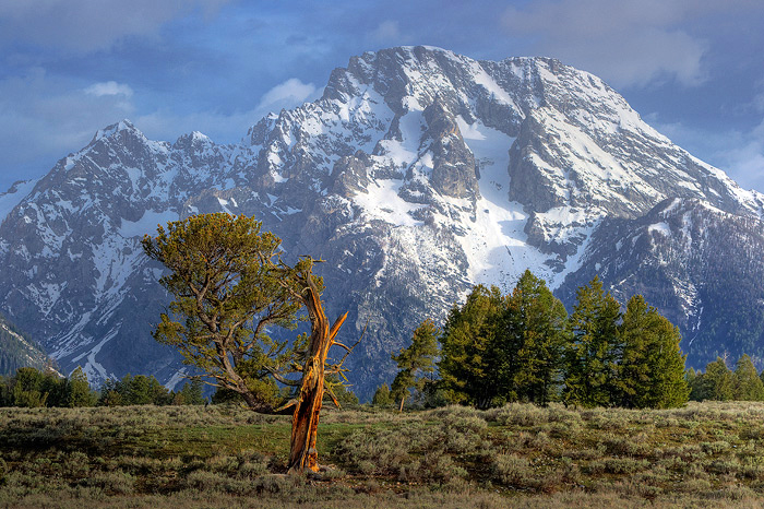 Old Patriarch, Mt. Moran, Grand Teton National Park, mountain, photo