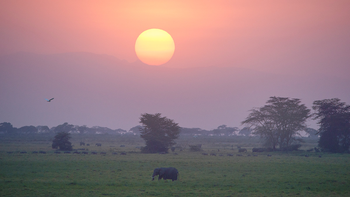 Amboseli National Park, Elephant, Sunset, photo