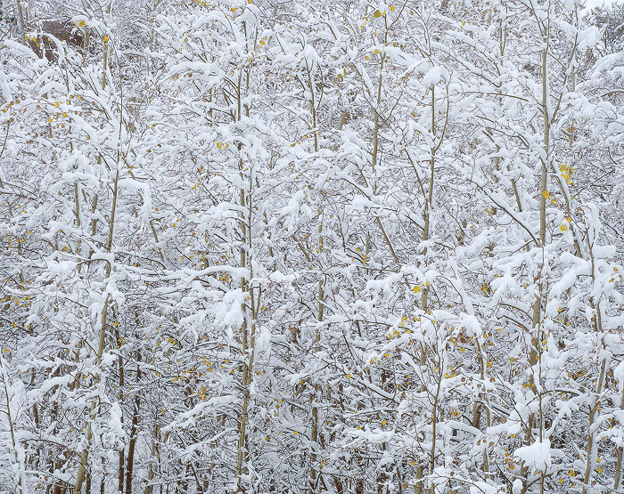 Vedauwoo, Aspens, Snow, photo