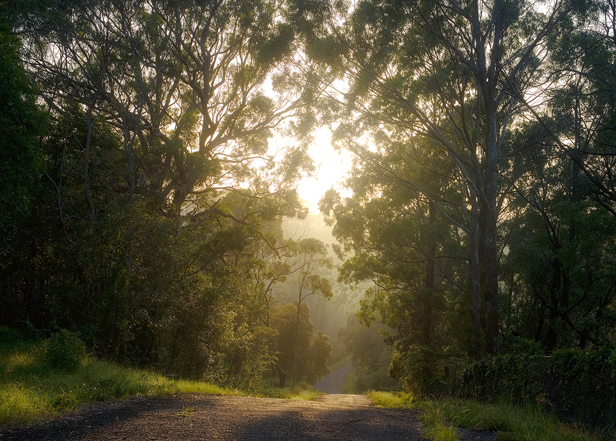 road, forest, less, traveled, Australia, NSW, photo