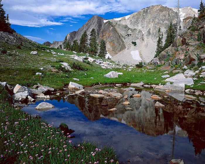 Snowy Range, wildflower, lake, reflection, photo