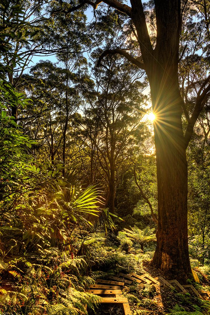 Sublime, Point, sunrise, bush, hiking, walk, rainforest