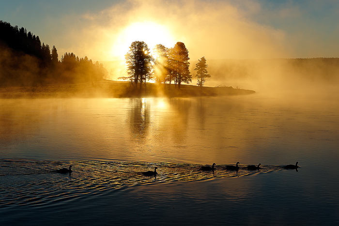 Yellowstone National Park, Sunrise, Geese, photo