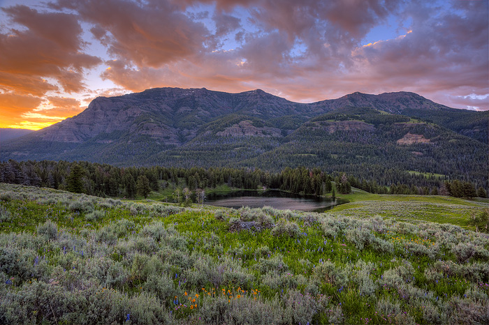 Yellowstone National Park, Sunrise, Mountain, Lake, Wildflower, photo