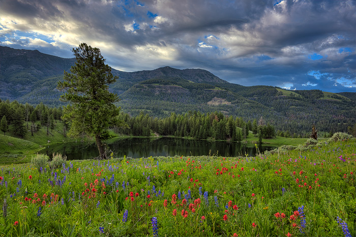 Yellowstone National Park, Wildflowers, Lake, photo